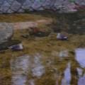 夙川(西宮)、やっぱり水がきれいなんだな〜・・・・